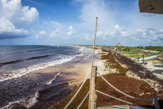 Beach Area, not usually covered in seaweed! - Picture of Playa