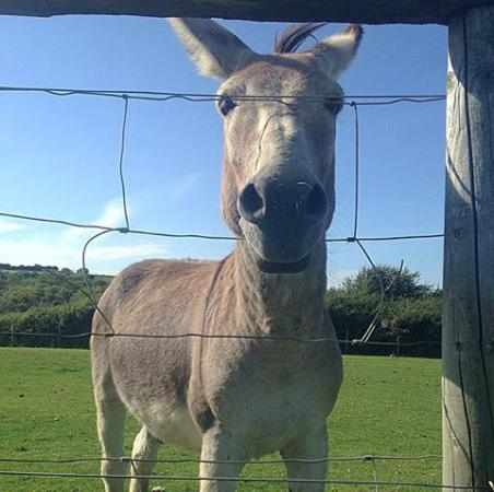 Foel Farm Park: Smile :)