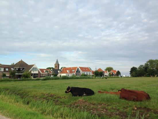 view from the front yard towards Zunderdorp
