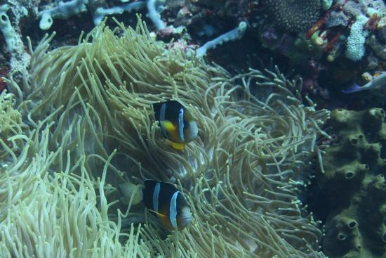 Paradise Diving Bali - Deutsche Tauchschule: Die gibt es hier auch :)