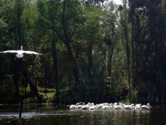Observacion de aves en Xochimilco