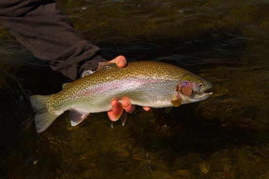 Katmai Lodge : Big rainbow caught on topwater mouse.
