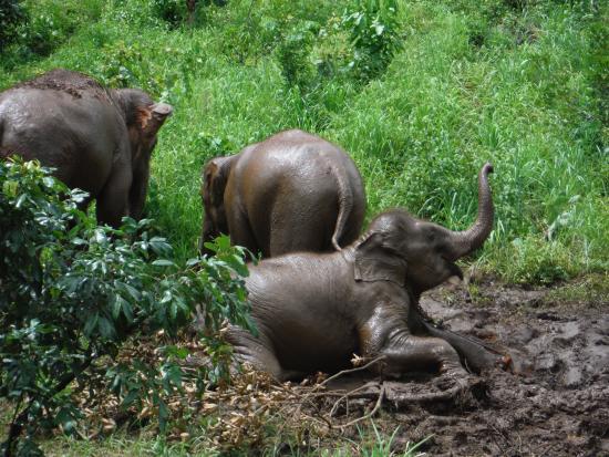 班昌大象公园-私人一日游
