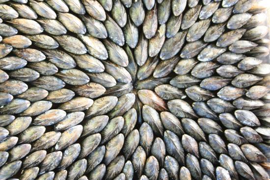 camping au pigeonnier : eglade de moules