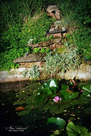 Show Gardens & Butterfly house: Ogrody Markiewicz