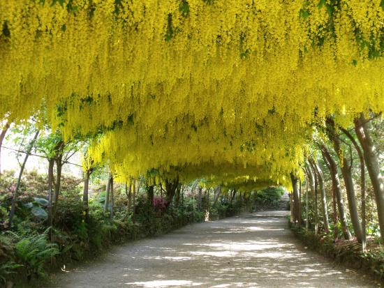 Picturesque The Laburnum Archbodnant Garden  Picture Of Bodnant Garden Tal  With Luxury The Laburnum Archbodnant Garden With Adorable Red Cross Garden Southwark Also Tropical Gardens Lodge And Function Venue In Addition Ebay Garden Shredder And Swing Seats For Garden As Well As Raised Bed Vegetable Gardening Additionally Aldi Garden Storage Box From Tripadvisorcom With   Luxury The Laburnum Archbodnant Garden  Picture Of Bodnant Garden Tal  With Adorable The Laburnum Archbodnant Garden And Picturesque Red Cross Garden Southwark Also Tropical Gardens Lodge And Function Venue In Addition Ebay Garden Shredder From Tripadvisorcom