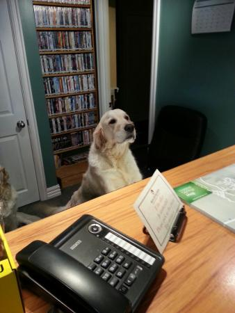 Alpine Springs Motel: Reception assistance :)