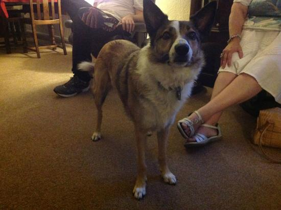 Chedwell Cottage: The lovely Tanzy