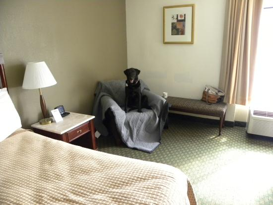 Days Inn Newport News/Oyster Point at City Center : Our room, no frills, but large and comfortable.