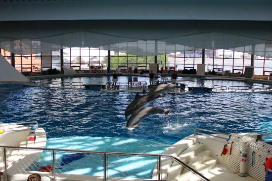 Dolphin show Picture of National Aquarium Baltimore TripAdvisor