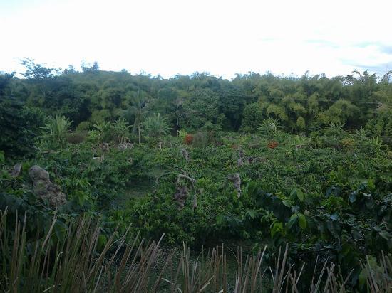 lemuria land