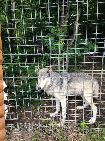 Wolf Mountain Nature Center: Just had lunch