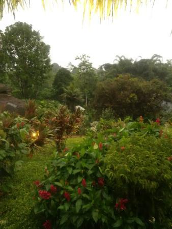 Arasha Tropical Rainforest Resort & Spa: Tropical setting