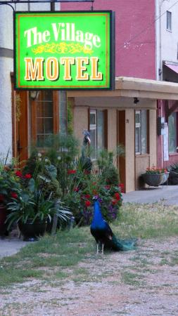 The Village Motel: Posing for the motel ...