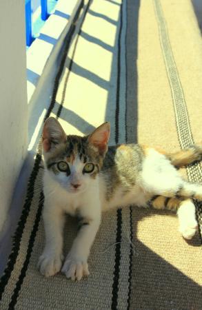 Cafe des Delices: Petit chaton