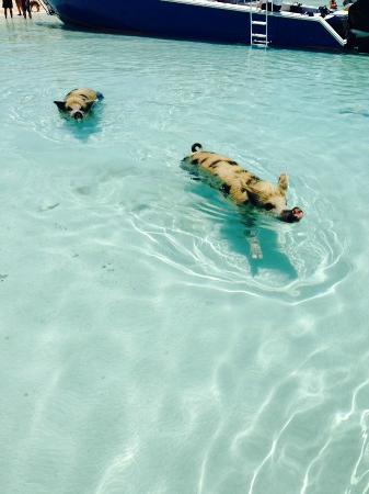 Exuma Cays Adventures: mehr...