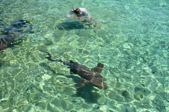 Exuma Cays Adventures: Peter mit den Ammenhaien