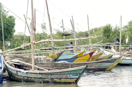 Dunga Bay: Fishing fleet