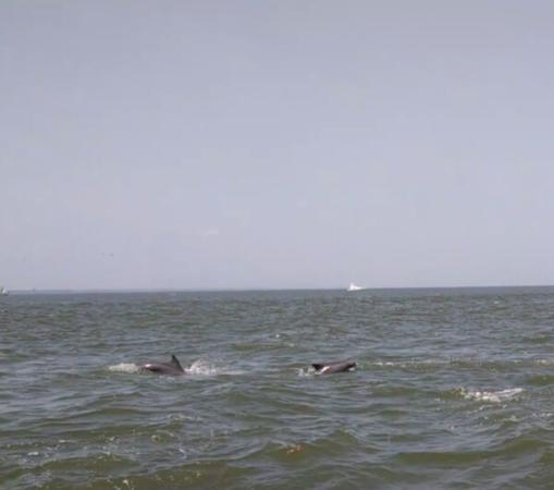 Captain Derek's Dolphin Adventure: Savannah dolphins