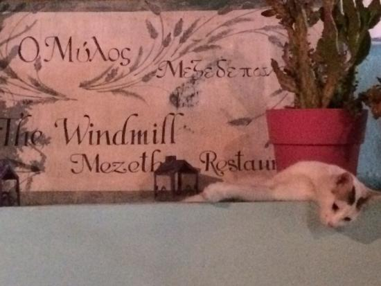 The Windmill Restaurant : The Windmill with cat