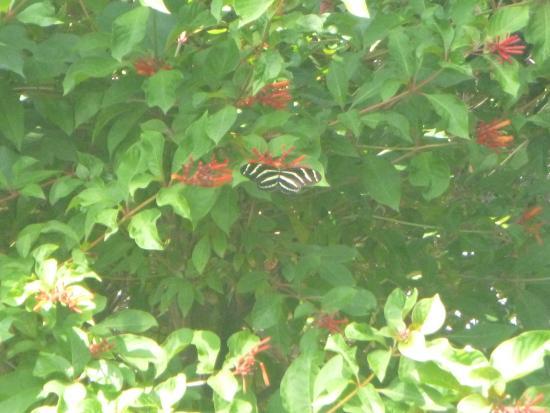 Sandoway House Nature Center: Butterfly Garden