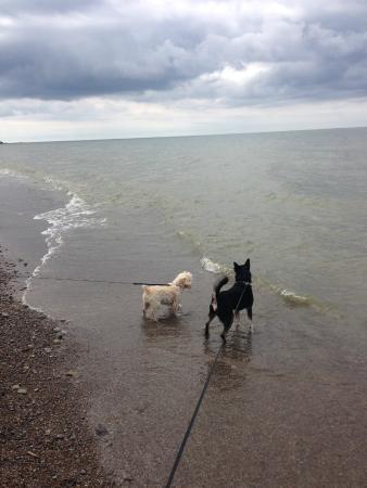 Long Point Provincial Park Dog Beach