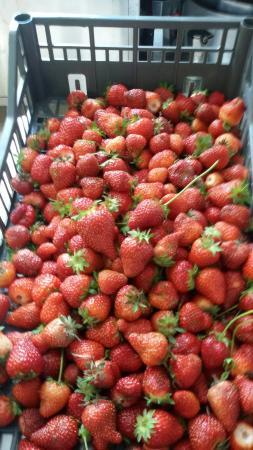 Agriturismo Vinaggia: Mangiare  immersi nella natura