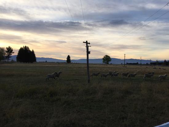 Twizel, Nuova Zelanda: こんな宿泊先は初めて。 カントリーチックで、 大人4人子供2人でちょうどでした。景色も良かった。