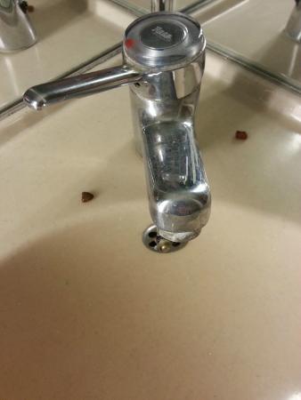 Lemon Hotel : croquette lavabo