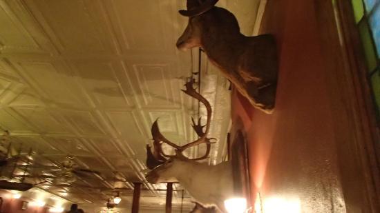 The Irish Lion Restaurant & Pub: hunting trophies on the main level