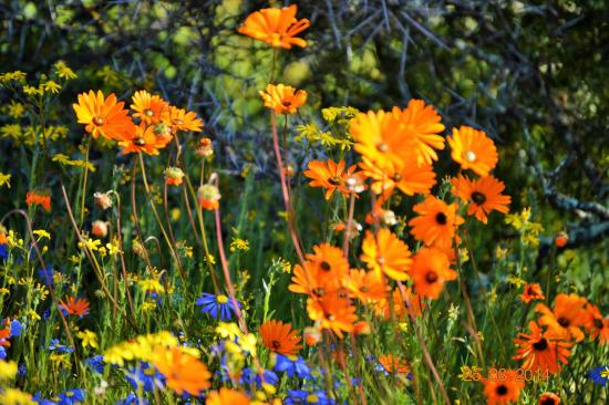 Springbok Park National Monument