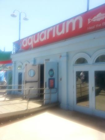 Santa Monica Pier Aquarium Picture Of Santa Monica Pier Aquarium Santa Monica Tripadvisor
