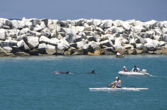 ดานาพอยต์, แคลิฟอร์เนีย: Enjoy kayaking or paddleboarding, but don't be surprised to have dolphins come along for the fun