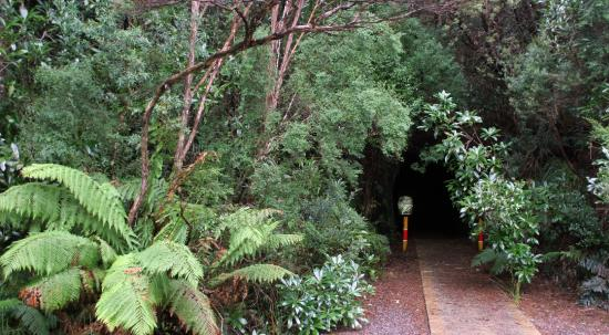 Entrance To Tunnel Picture Of Spray Tunnel Zeehan