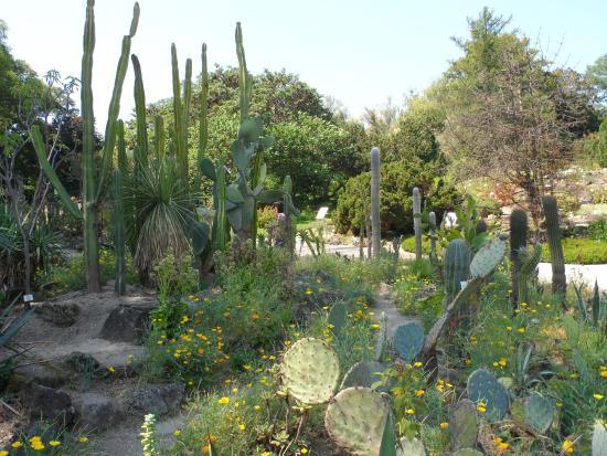 Alpengarten: El parque es inmenso....nos llamo mucho la atencion un sector dedicado a los cactus