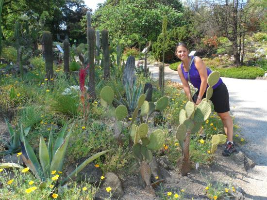 Alpengarten: Recorriendo el parque....