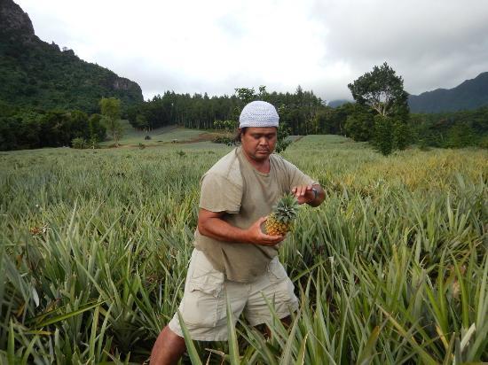 Magic Mountain: Dammon picking a pineapple