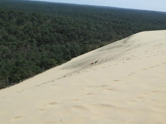 grande dune du pilat picture of dune du pilat la teste de buch tripadvisor. Black Bedroom Furniture Sets. Home Design Ideas