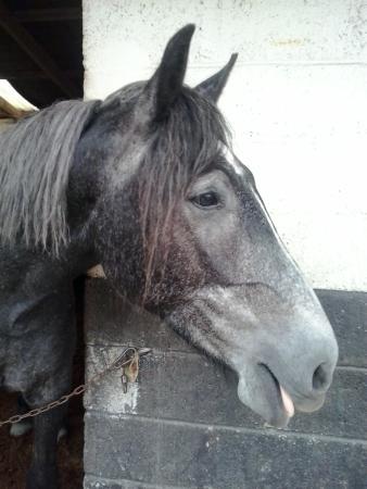 Slieve Aughty Riding Centre: Bento... il cavallo che mi è piaciuto di più <3
