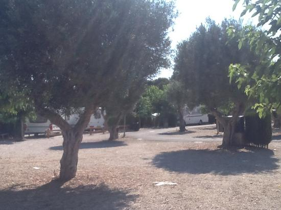 Camping La Torreta: Plenty of open space on the site
