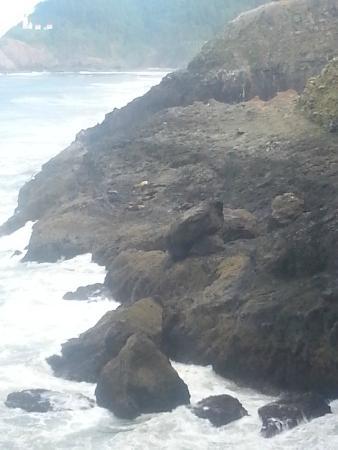 ฟลอเรนซ์, ออริกอน: Sea Lion Cave in Florence, OR  outter rocks on the north side view