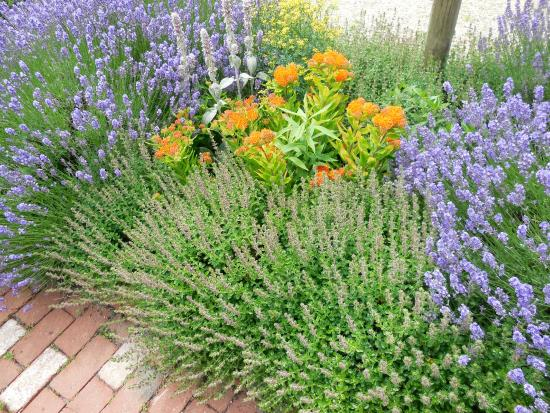 Atwood House Museum: Nice Flowers