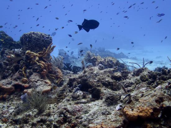 Diving Riviera Maya: Riviera Maya