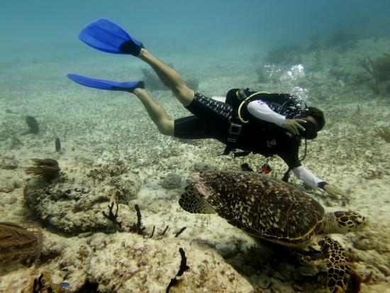 Diving Riviera Maya