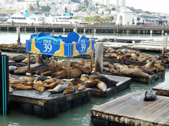 Suites at Fisherman's Wharf: P39 World Famous Sea Lions