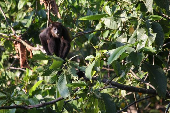 Funky Monkey Lodge: nature