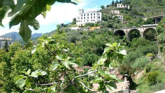 Giardino della minerva foto di giardino della minerva - Immagini di giardini di villette ...