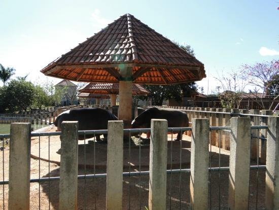 Jardim Zoologico De Brasilia: área dos hipopótamos