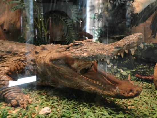 Museu de Ciencias Naturais
