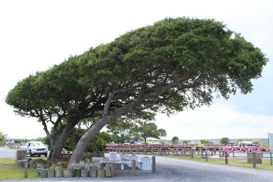 Soundside Park: Beautiful trees and foliage